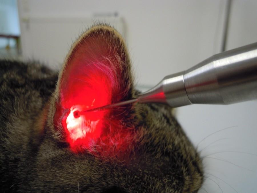 Lasertherapie_Softlaser_Otitis-externa_Vetc9VZJjMDwYd5k